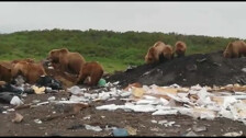 Медведи на Помойках