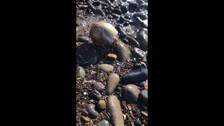 В Томари на берегу моря нашли череп человека