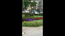 Хищение цветов