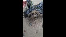 Нефтепродукты на побережье у села Мгачи