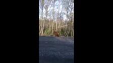 Медведя кормят в Быковском районе