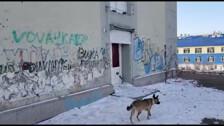 """Здание бывшей холмской гостиницы """"Чайка"""" теперь охраняется круглосуточно"""