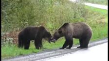 Борьба двух медведей
