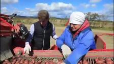 Сахалинский губернатор помогает собирать картофель